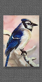 Bluejay, watercolor on paper
