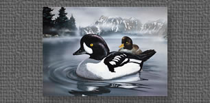 Golden Eye Duck - Alaskan State Waterfowl Stamp entry