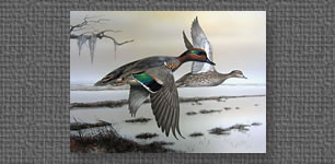 Green-winged Teal painted for LA Waterfowl Stamp Competition