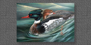 Red-breasted Merganser - Federal Duck Stamp entry