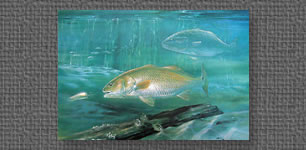 Redfish print commissioned as one of 4 wildlife prints by Southern artists