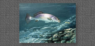 Oil painting of Speckled Trout chasing a lure