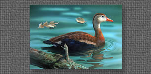 Black-bellied Tree Ducks - Federal Duck Stamp entry